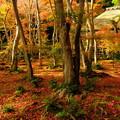秋の祇王寺 その3