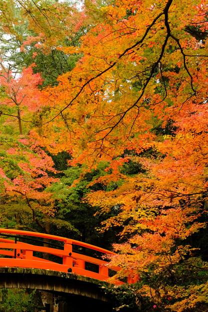秋色の鶯橋