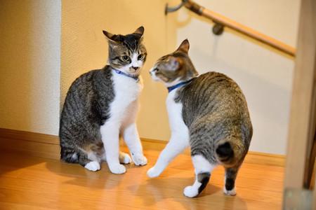 ショコラ(左)とシュガー(右)