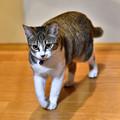 Photos: シュガーちゃん
