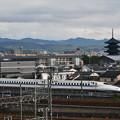 Photos: 東寺とN700A