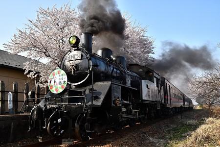 C12 66寺内発車と桜