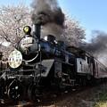 Photos: C12 66寺内発車と桜