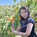 写真: Persimmon tree