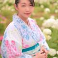 Photos: あぢさゐの花