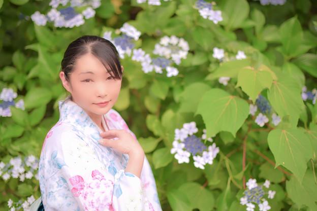 紫陽花ノ咲ク庭デ