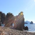 写真: 陽光をあびて