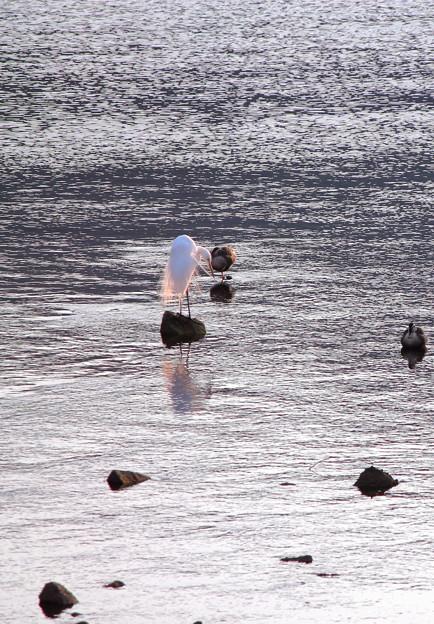 Photos: 川面の風景