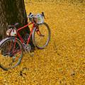写真: 黄色い絨毯