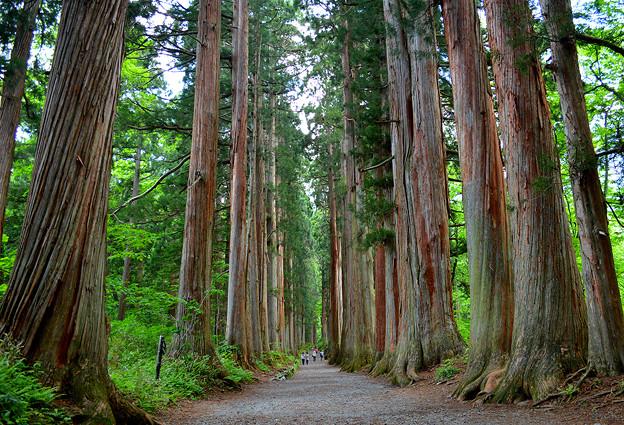 戸隠神社奥社杉並木