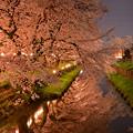 写真: 川越 新河岸川の夜桜