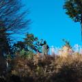 写真: お日様が眩しいデカイオッサン