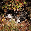 写真: ビリケン猫