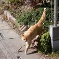 写真: 散歩を再開しました(^。^)