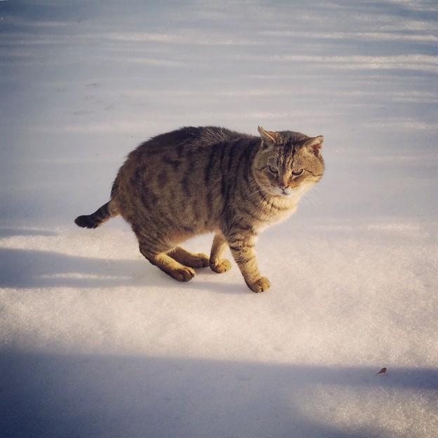 雪はイヤだニャ(-_-)
