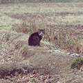 Photos: ビリケン猫