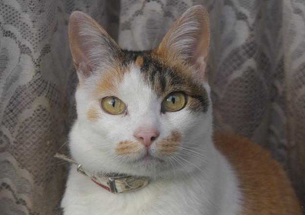 写真: たまちゃん一族の火星猫
