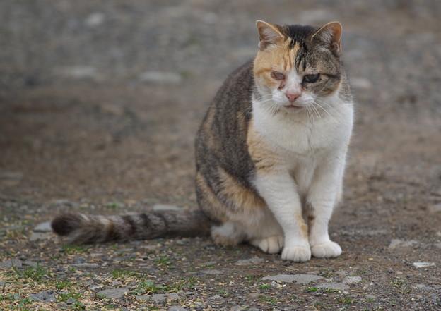 火星猫と申せば・・・