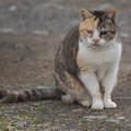 Photos: 火星猫と申せば・・・