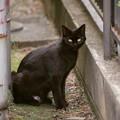 Photos: 久しぶりに会う黒猫さん