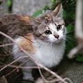 Photos: 夕方になったら・・・