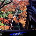 写真: 冬の三渓園