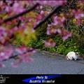 写真: ある春の日に
