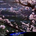 四季の鉄道・春