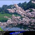 Photos: 春のひととき