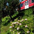 写真: 春の箱根路