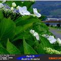 写真: 四季の鉄道・夏