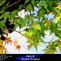 Photos: 小さな秋の日に
