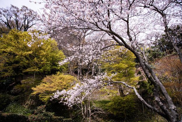 北鎌倉に春の風