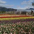 Photos: ハーブ庭園 旅日記