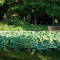 Photos: 水元公園 水生植物園