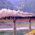 写真: 橋を往く