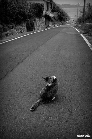 街猫421