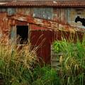 トタン倉庫#2
