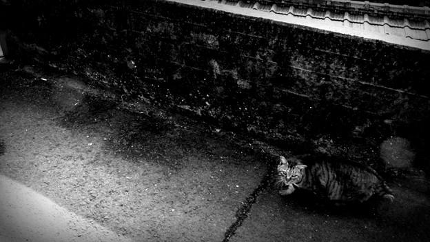 街猫906m