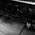 写真: 街猫906m