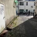 写真: 街猫911