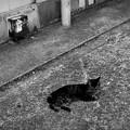 写真: 街猫918