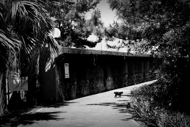 写真: 街猫923