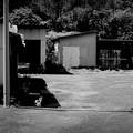 写真: 街猫926