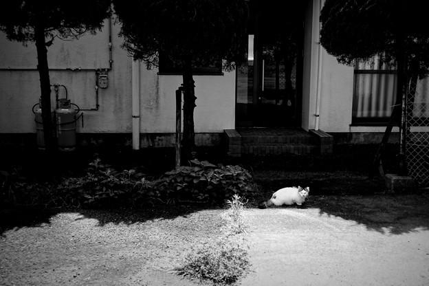 街猫929