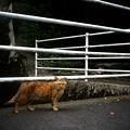 写真: 街猫944