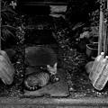 写真: 街猫976