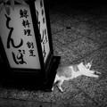Photos: 街猫987