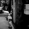 写真: 街猫990