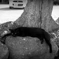 街猫1001